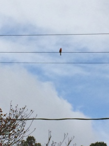 this is where is sitting on the wires above my yard.